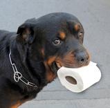 rottweiler, crotte et papier toilette