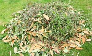tas de branchages pour compost